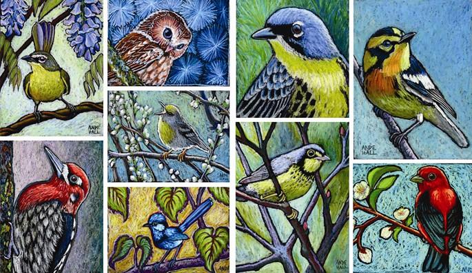 ande hall, bird paintings, oil pastel birds, art giveaway